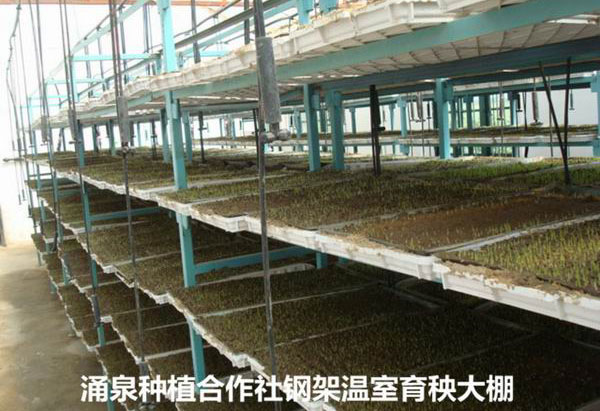 智能育秧工厂