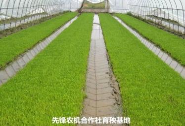 水稻集中育秧