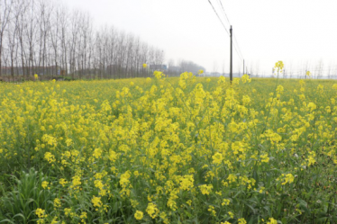 洪湖亚搏官方平台联合社亚搏官网官方平台绿肥示范基地
